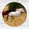 image of a pony, Issuba