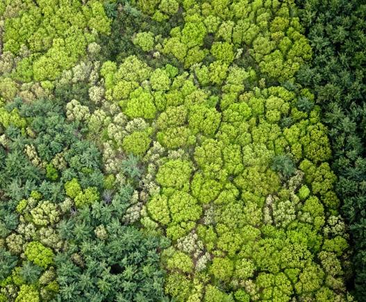aerial treetops