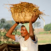 Indian man carrying basket of grain
